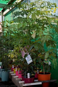 Nimbin Building Materials plant nursery and gardening supplies